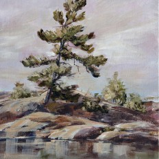 Georgian Bay Pine