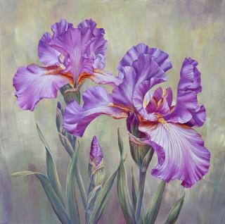 Iris Friends
