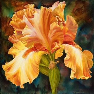 Iris of Gold I