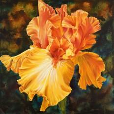 Iris of Gold II