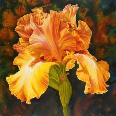Iris of Gold III