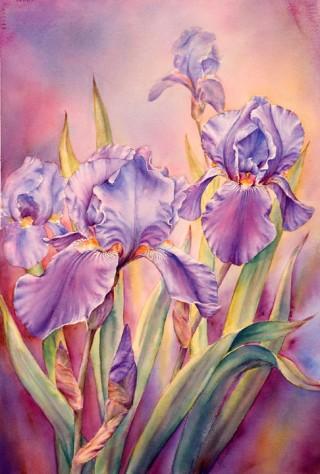 Irises at Dawn