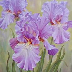 Mauve Irises