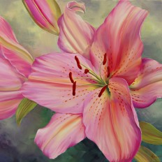 Oriental Lilies