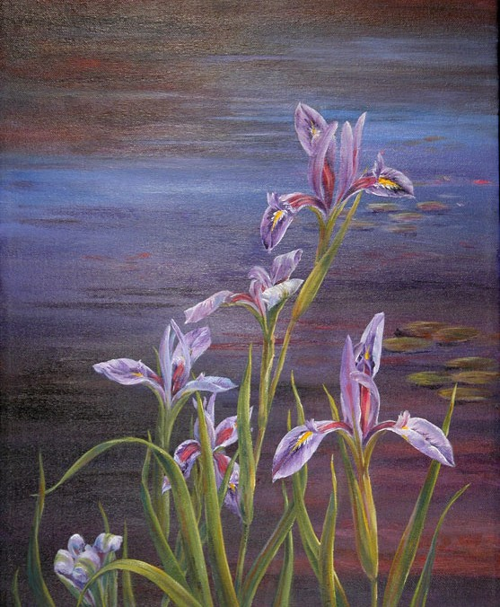 Pond Irises