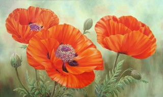 Poppies Three