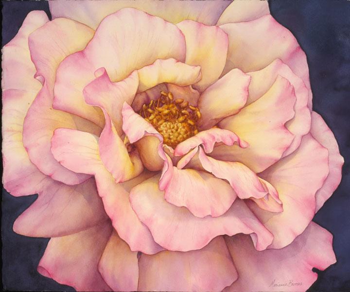 "Rosa ""Peace"""