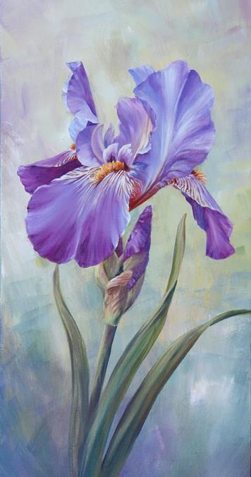 Single Iris