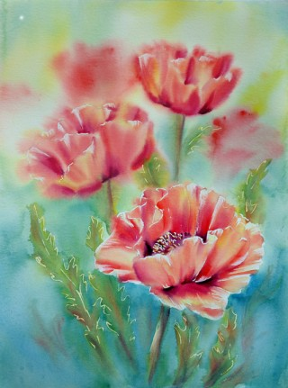 Soft Poppies