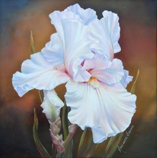 White Iris II