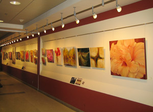 Facets of Nature Show