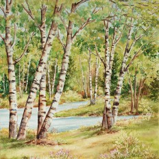 Birch River In Summer