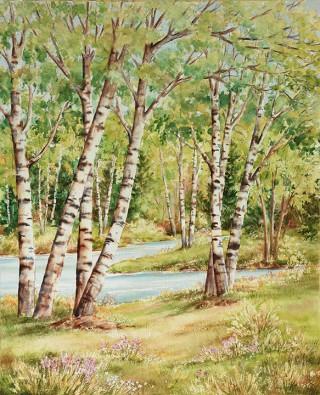 Birch River In Summer
