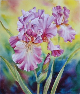 Mauve Iris Dance