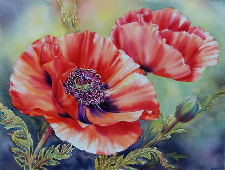 Poppy Blooms