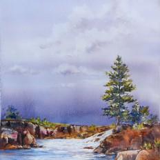 Waterfall And Pine
