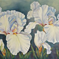 White Iris Party